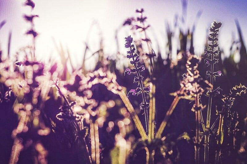 Kreuzallergien: akutes Belastungspotenzial im Frühling